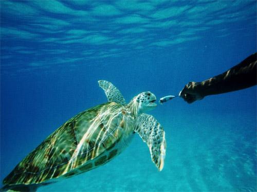 Дайв-тур на Канарские острова «Дайвинг на островах Эль Йерро и Тенерифе»