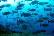 Дайвинг тур на Тенерифе «В поисках Атлантиды»
