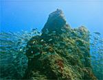 Дайвинг тур на Канарские острова «Дайвинг на островах Эль Йерро и Тенерифе»