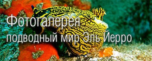 Фото Эль Йерро - подводный мир