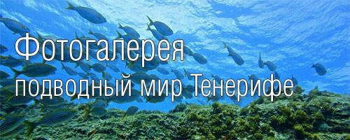 Фото Тенерифе - подводный мир